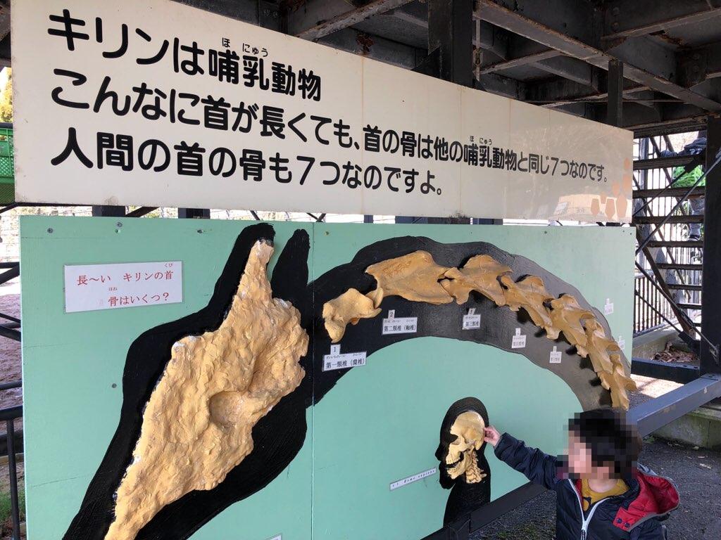キリンの骨