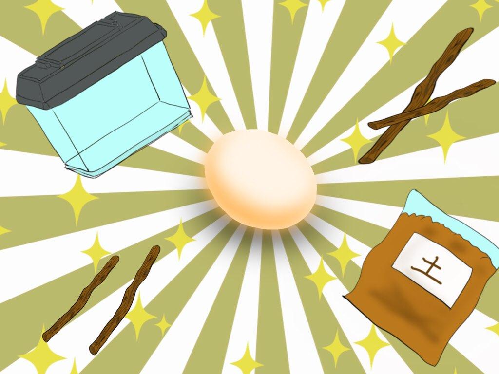 子供と一緒にクワガタ飼育〜専門家に聞いた『卵を産んでもらう飼育セット』に必要な道具〜 - コームズチャンネル